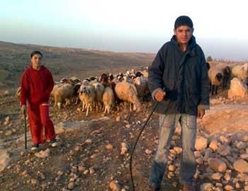 'Aliaa and Hamzah a-Nawaj'ah with their sheep. Photo: Nasser a-Nawaj'ah, B'Tselem, 22 Dec. 2010