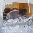 <p>[10653] 7.1. עופרת יצוקה: הכניסה לבית משפחת דיב, 11 מבני המשפחה נהרגו מפגז/טיל שנורה לעברם שעה שישבו בחצר, 6.1.09</p><p>תצלום: מוחמד סבאח, בצלם</p>