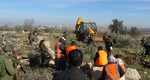 Civil Administration forces uproot olive trees on 'Azzun village land. Photo by Abdulkarim Sadi, B'Tselem, 16 Jan 2017
