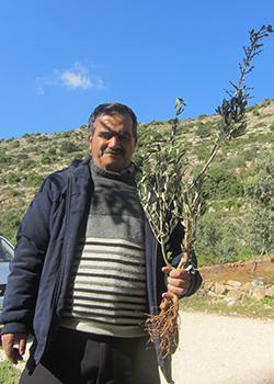 'Abd al-'Aziz 'Aqel, one of the landowners, holding an uprooted seedling. Photo by Abdulkarim Sadi, B'Tselem, 3 April 2017